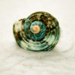 spiraldynamik